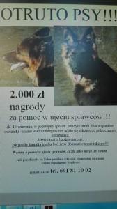 Otrute psy - Jagatowo